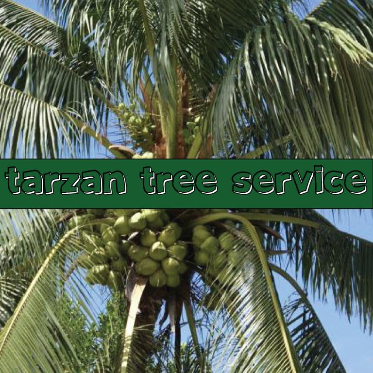 Tarzan Tree Service